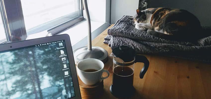 Eine Katze, die neben einem Computer schläft