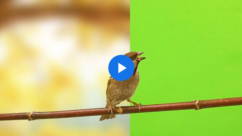 Cómo crear un fondo fotográfico para imágenes de pantalla verde