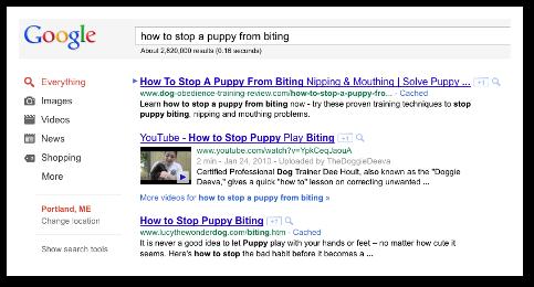 ako zabrániť šteňaťu