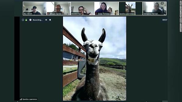 llamada de conferencia virtual de visita a la granja