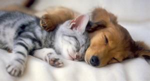 Lindos cachorros y gatitos