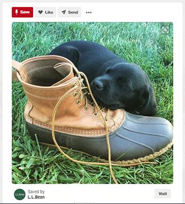 L.L. Pinterest Ví dụ về chủ đề chéo