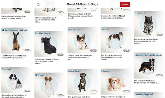 Petplan Pinterest Bảng