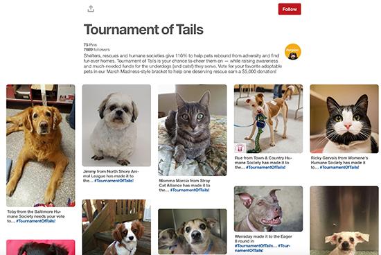 Petplan Pinterest Giải đấu Trail