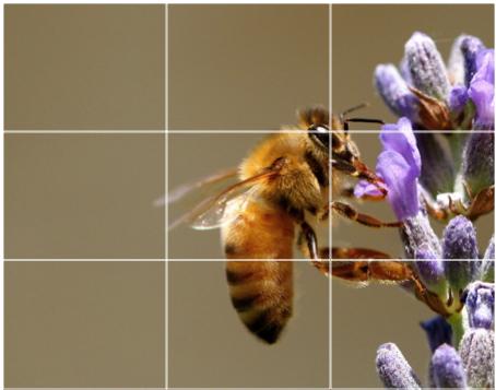 Créditos de imagen: digital-photography-school