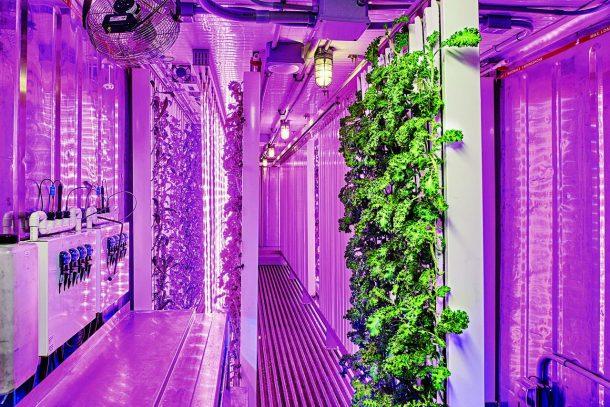 Contenedores de envío listos para redefinir el futuro de la agricultura_Imagen 2
