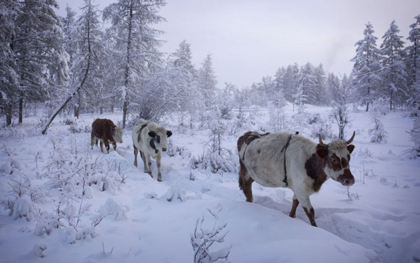 Oymyakon, la ciudad más fría del mundo18
