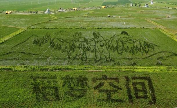 Arroz arte china Liaoning9