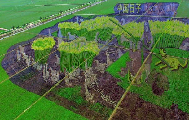 Arroz arte china Liaoning11