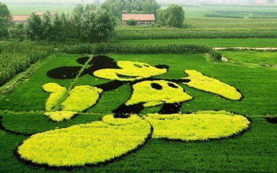 Arroz arte china Liaoning4