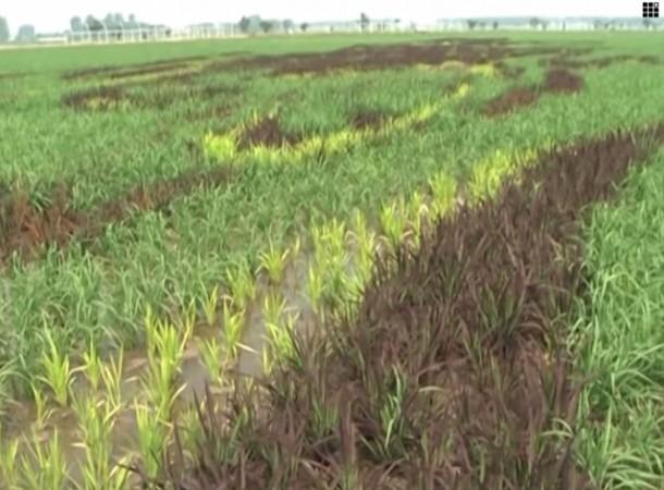 Arte del arroz china Liaoning