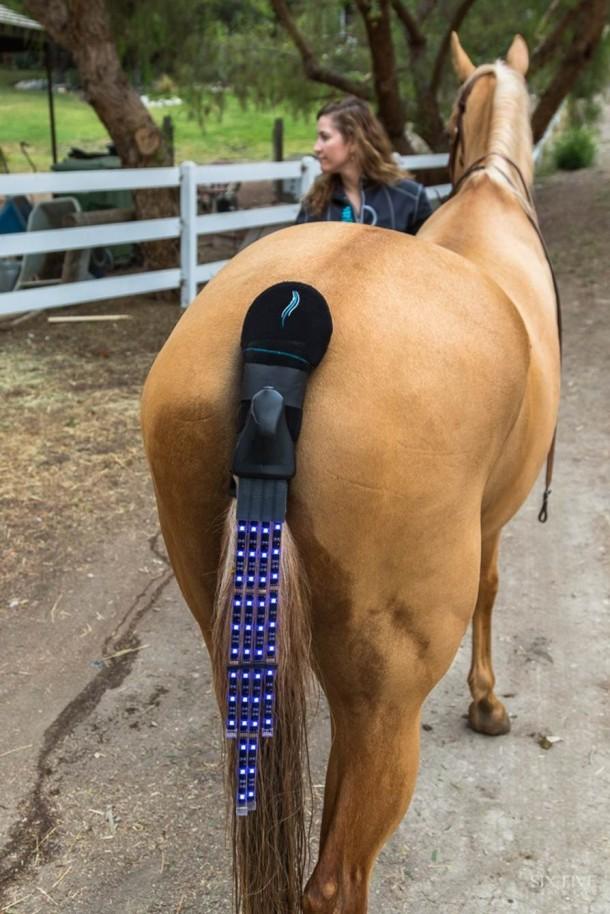 Programa de seguridad del piloto de luces traseras - Horse Safety 6
