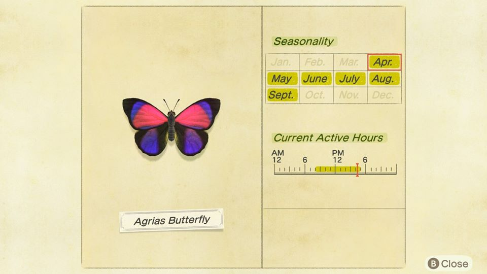 How to Catch Agrias Butterfly in Animal Crossing New Horizons