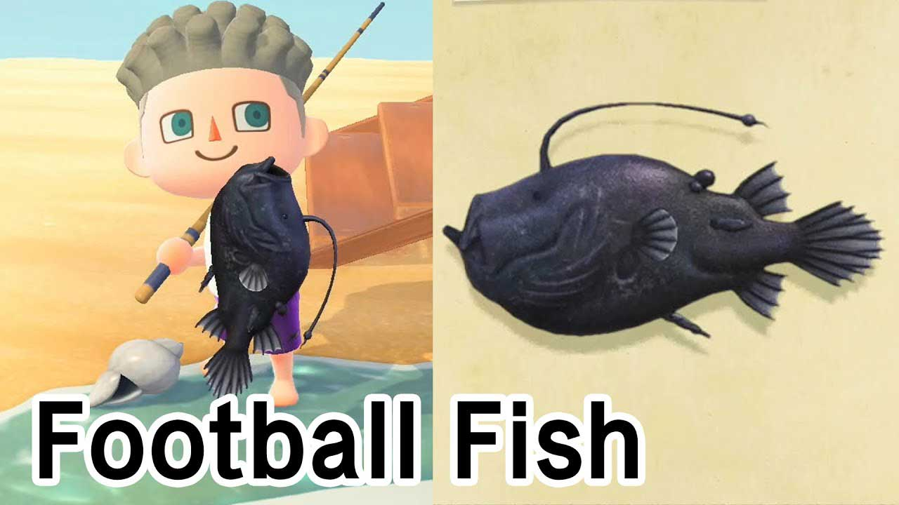 How to Get a Football Fish in Animal Crossing New Horizons