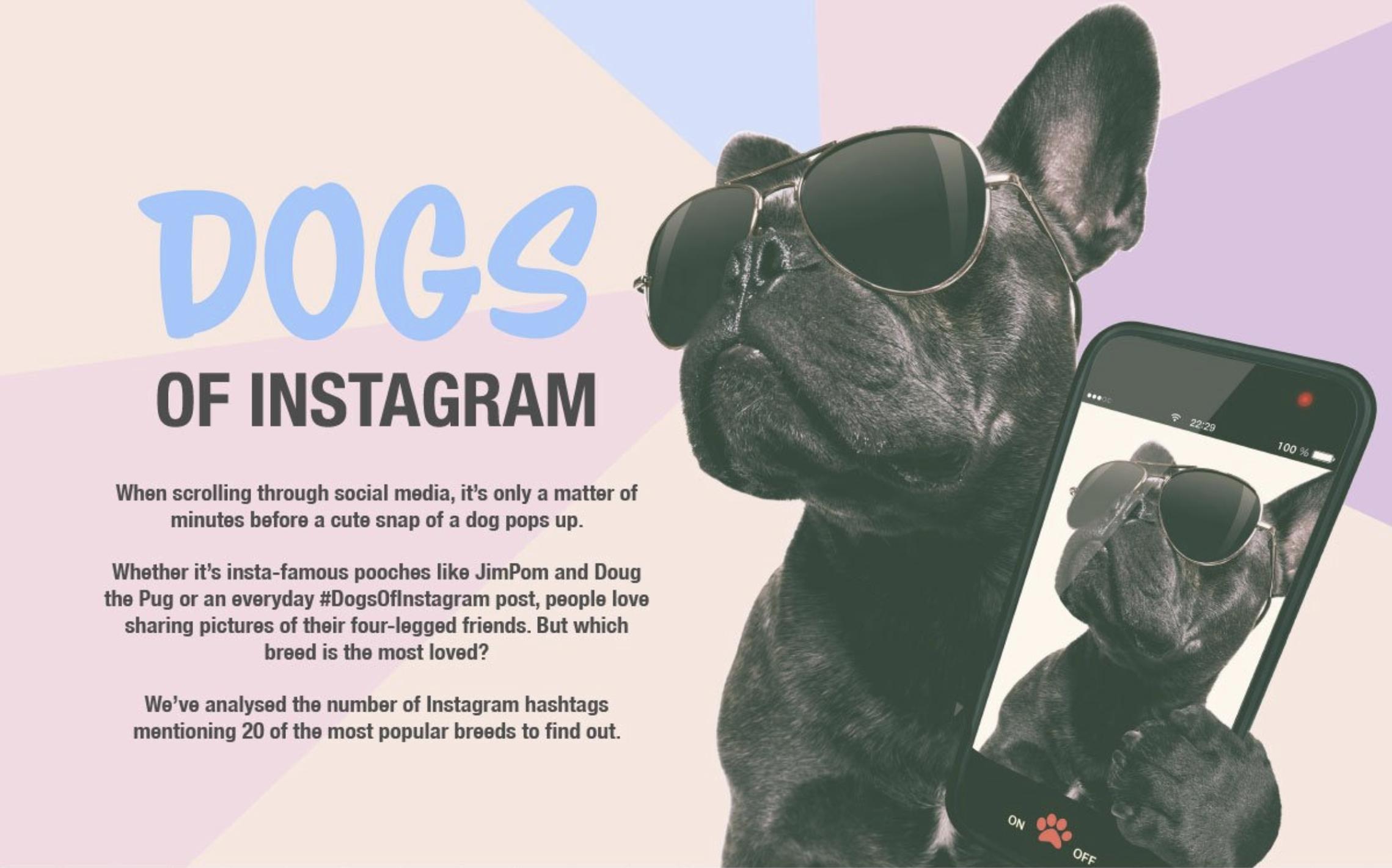 Campaña Perros de Instagram de MyVoucherCodes