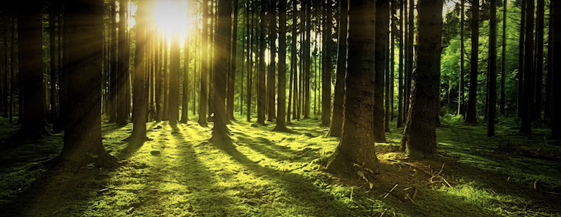 Empresas de hosting sostenible